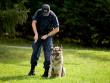 formation agent de sécurité cynophile maitre chien