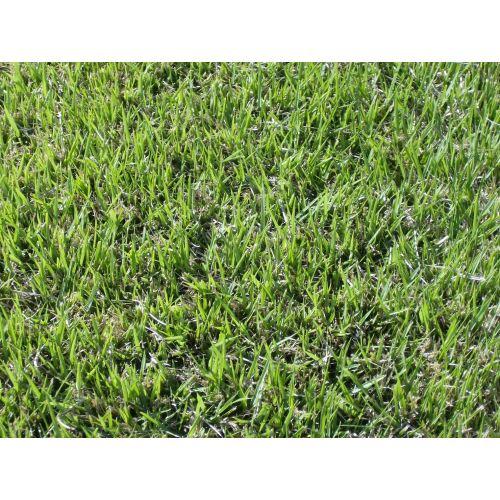 Medium Crop Of Centipede Grass Seed