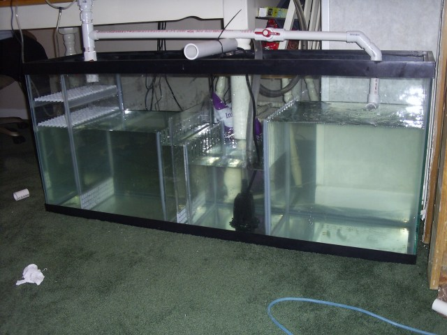 Help setting up a 120 gallon salt water tank | Saltwaterfish Forum