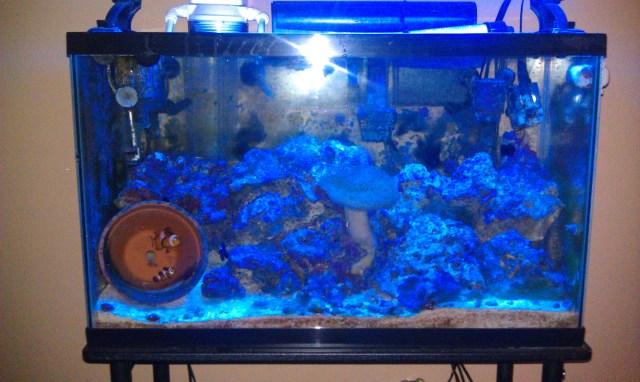 30 gallon saltwater tank 6 years old | Saltwaterfish Forum