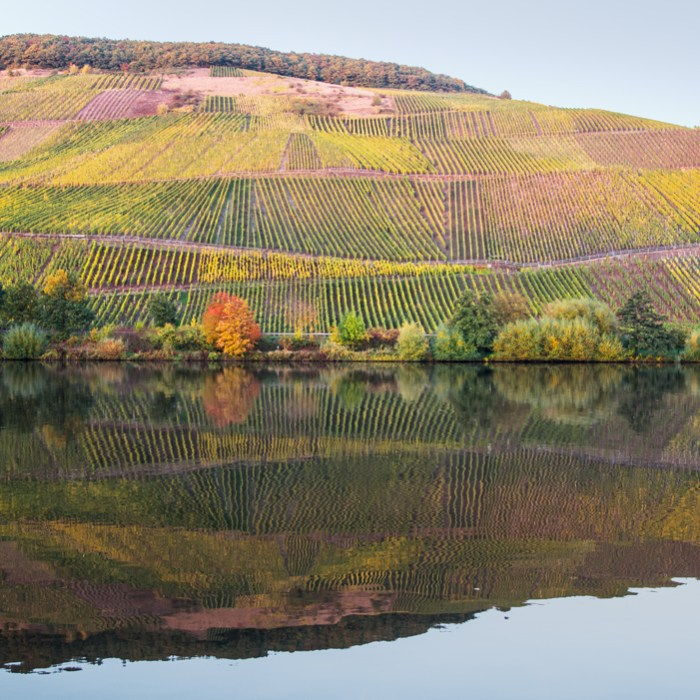 weinberge_longuich_2_27-10