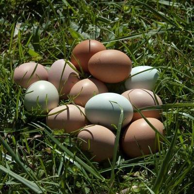 Four Corners Farm eggs