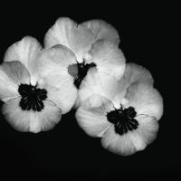 bwflowers