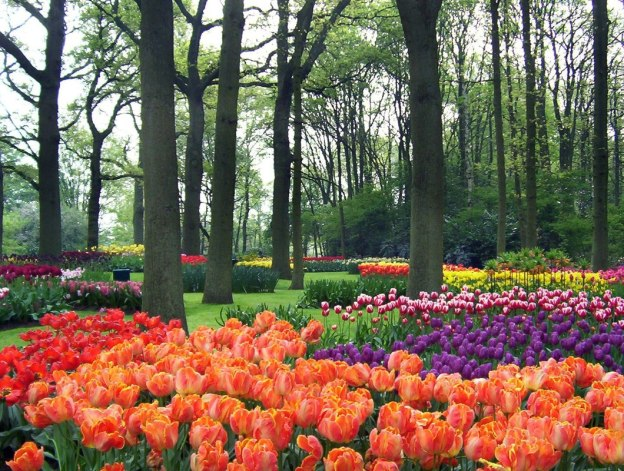Various tulip beds in a forest at Keukenhof Gardens in the Netherlands.