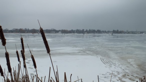 Frenchman's Bay - owl is out on the ice - Pickering - Ontario