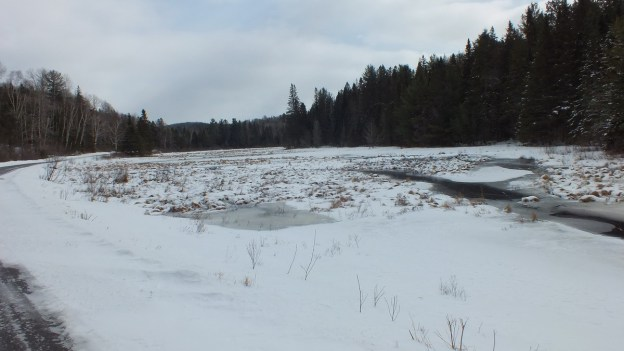 Photo of snow covered swamp area along the edge of the Opeongo Road in Algonquin Provincial Park, Ontario.