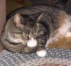 middle-finger-cat1