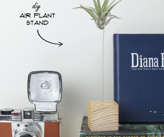 air-plant-stand