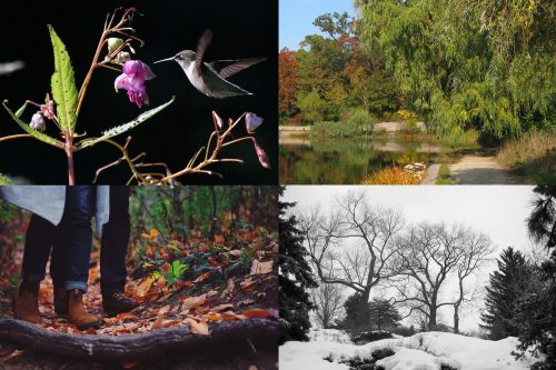 Four Season...in High Park by Frank Horvat