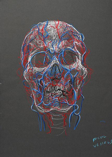 Facial Vessels, 2009, by Fred Hatt