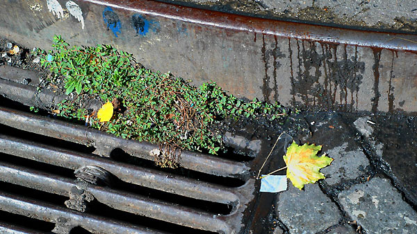 Storm Drain Greenery, 2004, photo by Fred Hatt