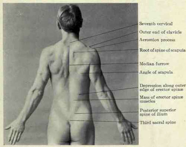 "Surface Anatomy of the Back, fig. 477 from ""Applied Anatomy: The Construction Of The Human Body"" by Gwylim G. Davis, 1913, Lippincott"