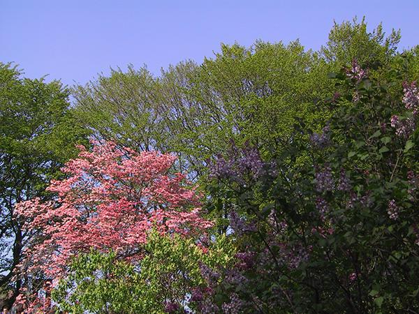 Pink Tree, 2001, photo by Fred Hatt