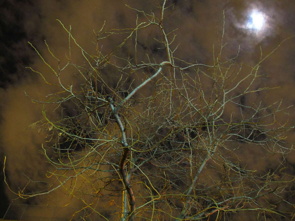Winter's Moon, 2010, photo by Fred Hatt