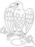 Printable animal eagle coloring book page
