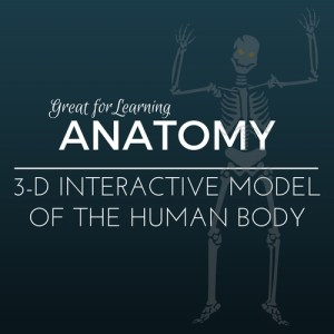 Free 3-D Interactive Model of the Human Body