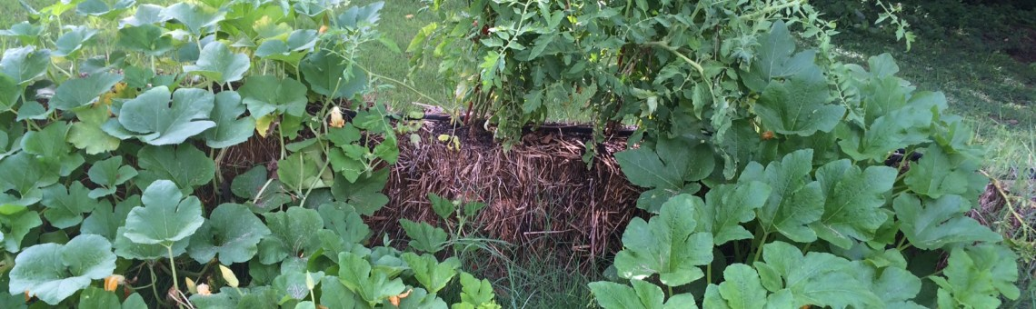 Is straw bale gardening for  you?