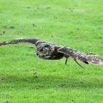 Flying Predators and your flock