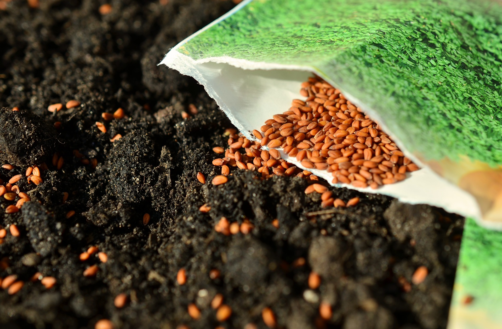 Garden Seeds Spring Is Finally Here! If Youu0027re A Gardener At Heart You  Probably Canu0027t Wait To Get Your Hands Into Some Dirt And Wait Expectantly  For Those ...