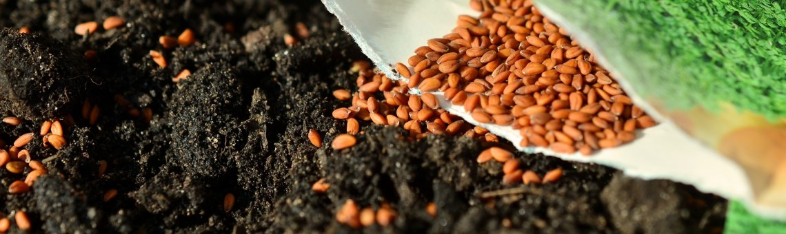 What's the difference in garden seeds?