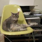 Cats Love Eames