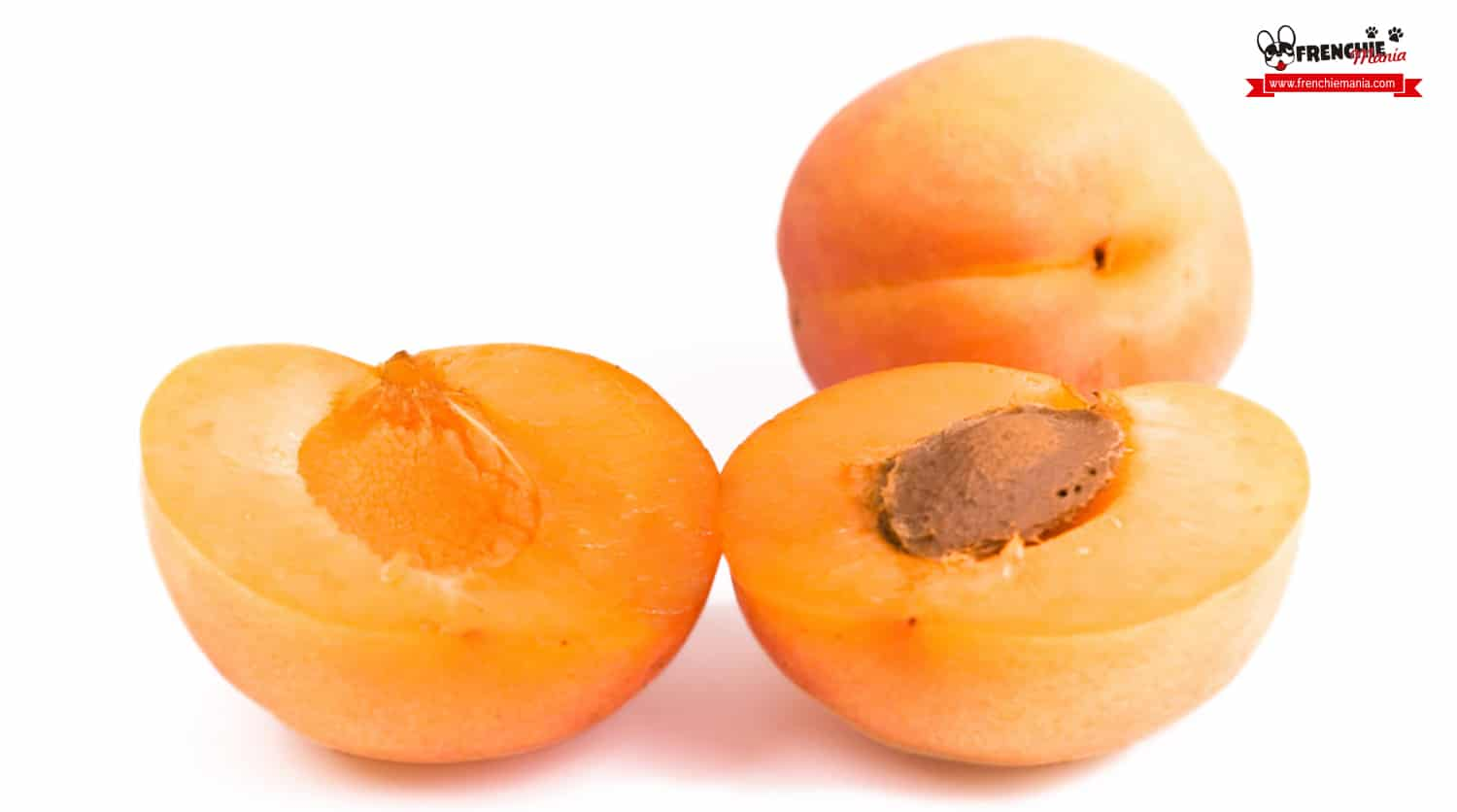 Cool Fruits Dogs Apricot Fruits Your French Bulldog Will Love To Eat Can Dogs Eat Green Apricots Can Dogs Eat Fresh Apricots bark post Can Dogs Eat Apricots