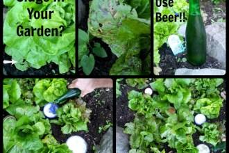 Slugs In Your Garden? | Freshly Grown