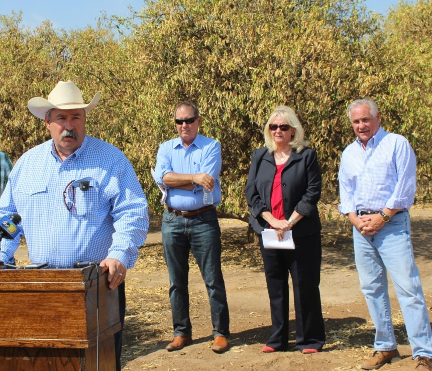 Against a backdrop of water-starved and soon to be pushed over orange trees, Assemblyman Frank Bigelow speaks to a Harlan Ranch news conference July 29. Listening (FROM LEFT) are Senator Tom Berryhill, Assembly Minority Leader Connie Conway and Assemblyman Jim Patterson.