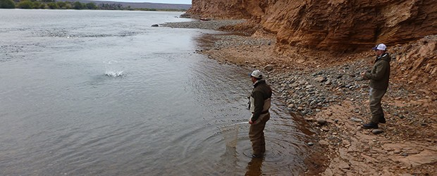 Fishing Diversity and New Car Smell in Northern Patagonia