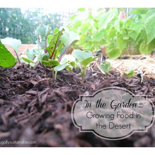 Medium Crop Of Rain Gutter Grow System
