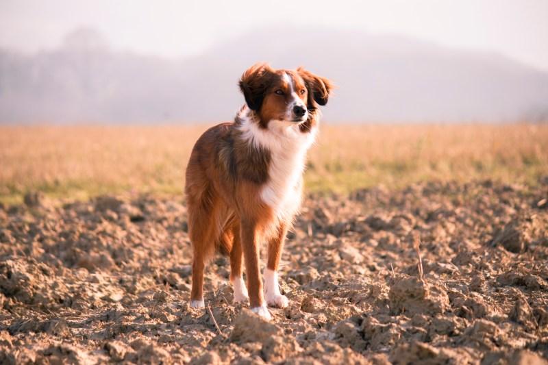 Large Of Friendliest Dog Breeds