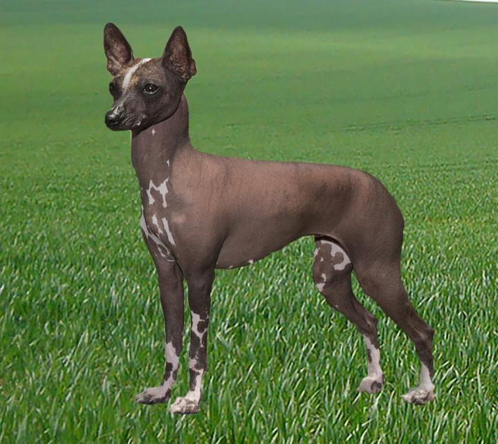 Large Of American Dog Breeds