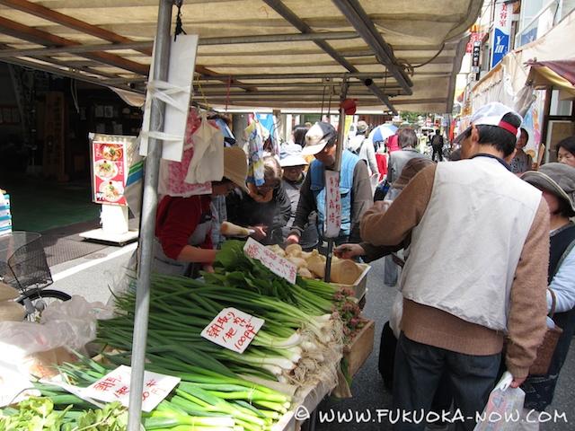 fn185 veggie Emiko 024