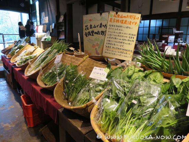 fn185 veggie ito agri 25
