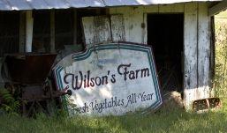 Wilson's Farm was established in 1919 by WIllis E. WIlson.