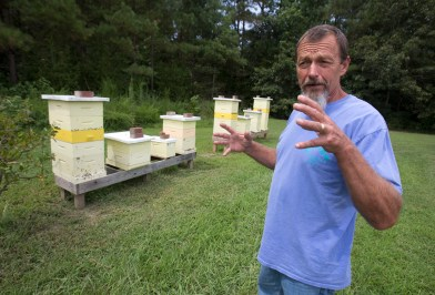 David Mitchell of Isle of Wight discusses a recent mass kill of his bees from what he believes to be farm insecticide applied to nearby fields during an interview on the issue on August 27, 2015 at Blackwater Honey Bee and Lavender Farm in Isle of Wight. (Adrin Snider)
