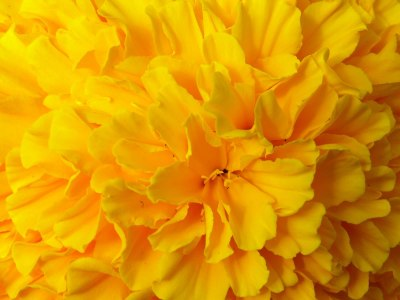 Yellow Flower HD Wallpaper   Full HD Pictures