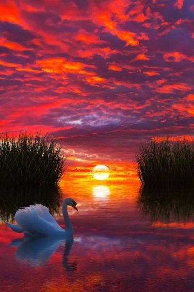 Sunset Photo 736x1104 - Full HD Wall