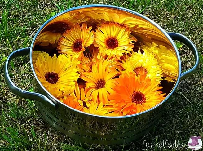 Ringelblumen aus dem Garten verarbeiten