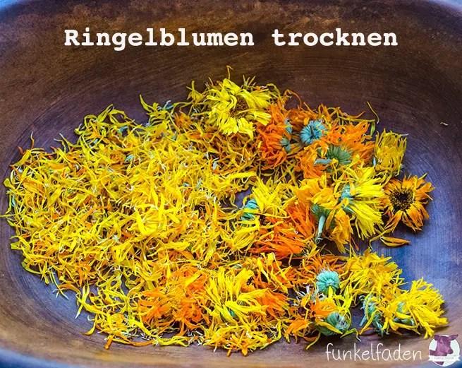 Ringelblumen trocknen für Tee und Kosmetik