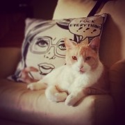 The combination of that pillow and this cat makes me laugh every time.