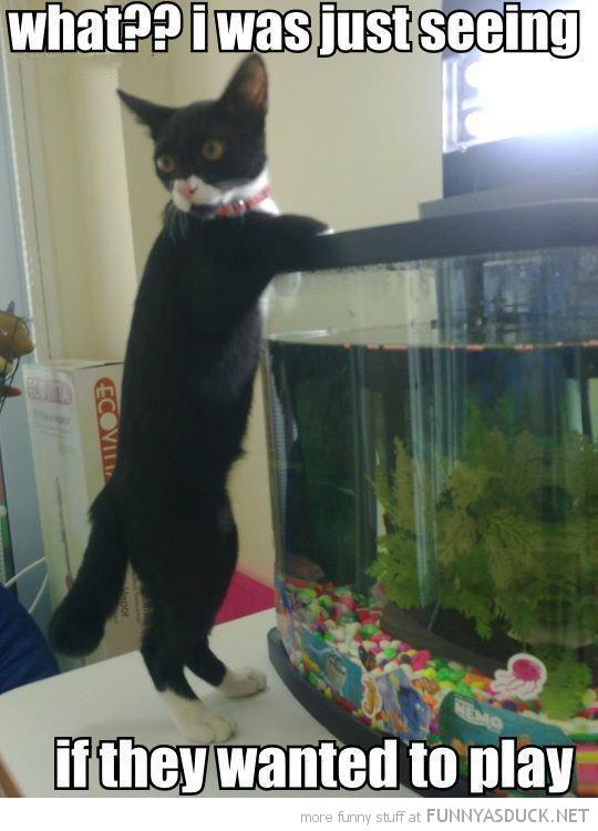 funny looking fish tank aquarium cat what see play pics