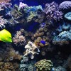 DIVING-Bayly-small_5791783978