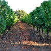 WINERIES-Ackerman-small_6137610386