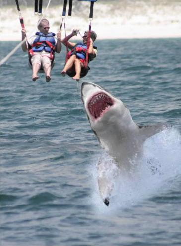 para-sailing-shark-attack