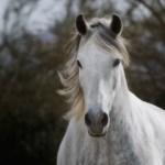 Marchador-Horse-Photo-Summer-Wind_4040