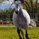 Summerwind_Marchador_horse_2116