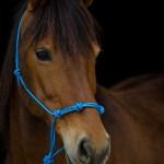 Summerwind_Marchador_horse_2231