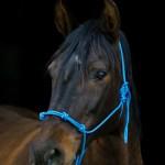 Summerwind_Marchador_horse_2277