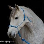 Summerwind_Marchador_horse_2420